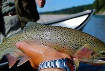 Fly Fishing Trips in Glacier National Park