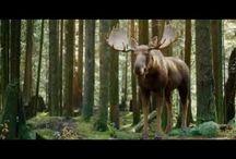 Moose! / by Jennifer Luther