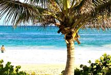 Life's A Beach / When you live on an tropical island, you can't help but bring the beach home
