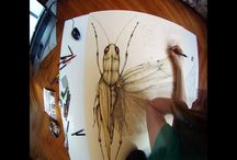 Drawings / My insect drawings