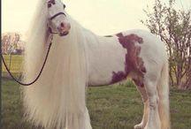 Paardjes / Lieve paardjes
