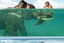 Słonie <3