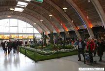 TuinIdee 2015 - Expo Famous Plants Gallery / De 'Famous Plants Gallery' is een expo met planten die een belangrijke rol in de wereldgeschiedenis hebben gespeeld. Deze planten met een verhaal zijn toe te passen in eigen tuin.