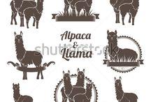 Peruvian and Llamas