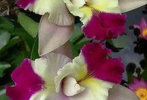 Flores Diversas e Rosas