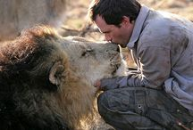 Kevin Richardson-Lion Whisperer