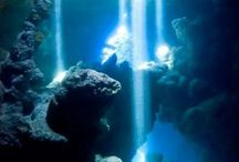 Fascinating OCEAN