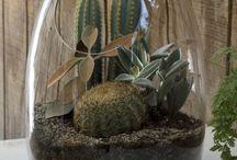 Plants / Indoor plants