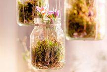 frascos con flores
