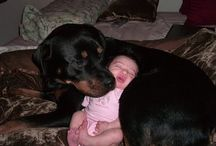 Dogs and babies buzzfeed Collection / Dogs and babies buzzfeed Collection Update here: http://3sanimals.com/Babies