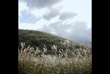 一瞬だけ陽が出て、わしゃわしゃと喜んでいる様に見えるススキ。ほんと一瞬だったので、露出を調節している時間も無かったです。 at Hakone Sengokubara #pampasgrass #hakone #japaneseview #landscape #ススキ #箱根 #仙石原 #秋の風景写真