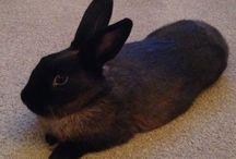 Bunny Board / Cutie bunny Bonnie