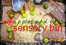 Sensory bins  / by Rachel Beach