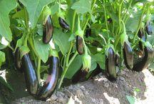 Sebze & meyve yetiştirme