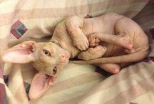 Skin_cat