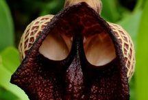 Most weird & rare plants