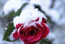 WINTER - CHRISTMAS -