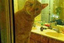 Caaaatz n odda petz / Soft kitty, warm kitty, little ball of furr. Happy kitty, sleepy kitty, purr purr purr