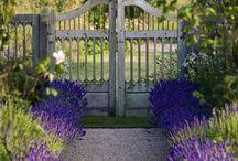 Small gardens / Outdoor