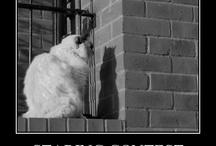 Cats Fini