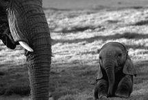 babies in wilderness
