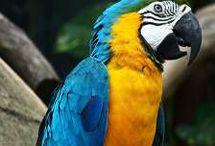 •Parrots•