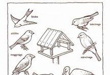 Zvieratá pracovné listy