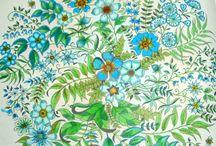 Coloration - Malbuch / Ausmalbuch, Coloration, Buntstifte, Natur