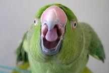Parrot Pins