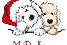 Moss Creek Goldendoodles dressed up for the Holiday! / Goldendoodles dressed up for Santa!