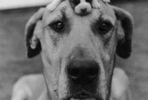 Kutyák / Legcukibb kutyák