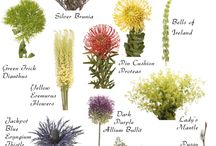 növény határozó