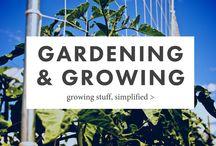 Gardening & Growing / Simple ideas for your garden: easy DIY projects, garden ideas, and garden inspiration.