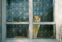 Kissa istui ikkunalla . . .