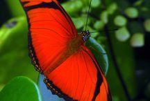 Kaunis perhonen