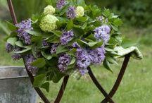 Nordic garden love