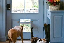 For the furry ones / by Elizabeth Holder Photography