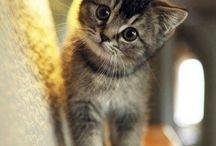 Katten / Leuke, lieve en schattige katten foto's