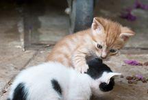 Koty / animals
