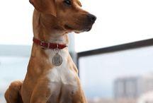 Romeo / Romeo es un mestizo que nació el 30 de octubre del 2010. Es puro amor y su mayor afición son las pelotas :-)