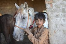 Pictures from Pakistan / Images from Pakistan