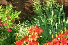 Garden: Tips & Techniques / All those wonderful gardening tips and techniques to make it easier, productive, and fun. / by Jami @ An Oregon Cottage