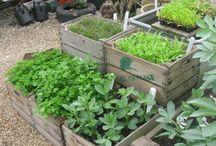 Living Green&Healthy