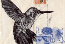 Colibri- hummingbird