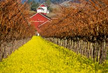 Napa Valley Wineries / Some of the Inn on Randolph's favorite wineries