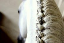 Horses hairstyles
