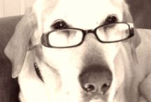 Dear Labby / Dear Labby advice column for dogs.  Question on dog health, behavior, fitness, life span, aging.