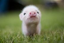 Cutie Patootie / by Jill Bednar