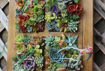 Živé obrazy - vertikální zahrada