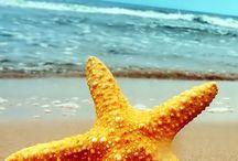 deniz yıldizi